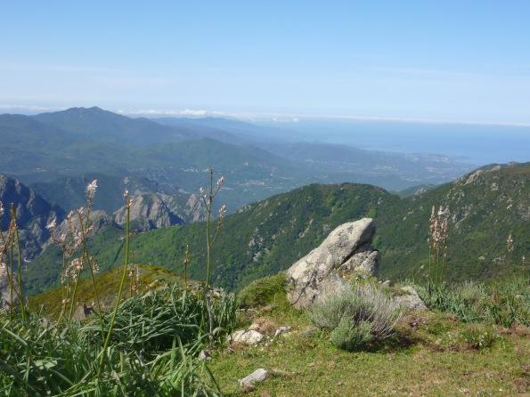 Trail Corse 085